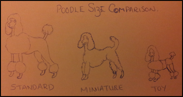 Poodle Size Comparison