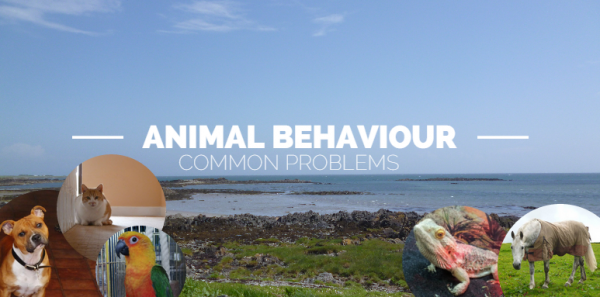 Behaviour Banner