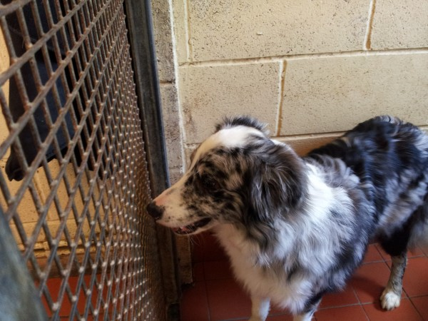 Unwanted dog, in an animal shelter
