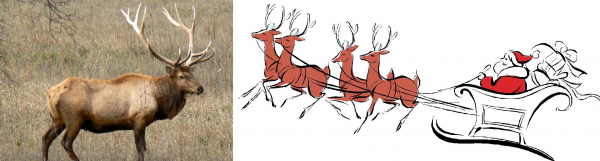 Red Deer - Santa's Reindeer
