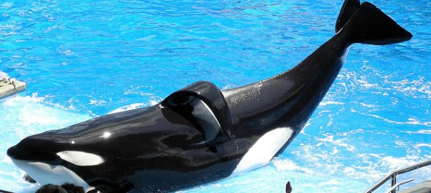 National Shamu Day – 26 September 2016