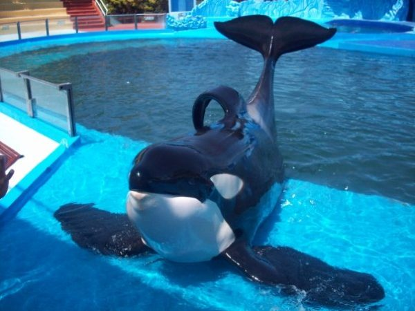 """Shamu"" - open source image"