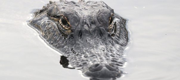 Want to know more? Crocodiles